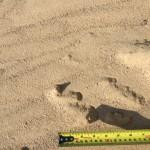 kopaný piesok Senica
